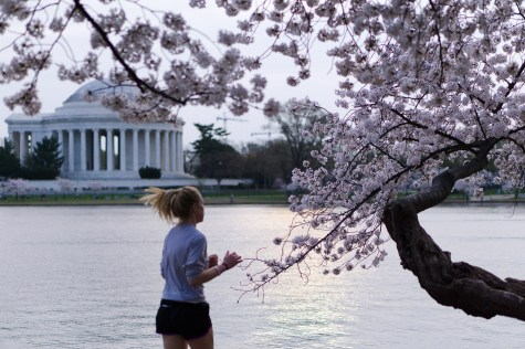 Cherry-Blossom-DC-Tidal-Basin-20160325-_DSC2761