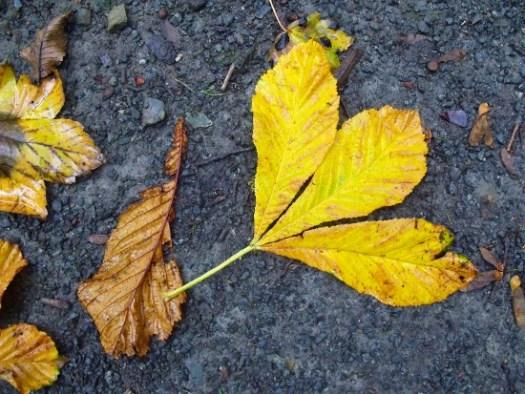 grey and golden leaf