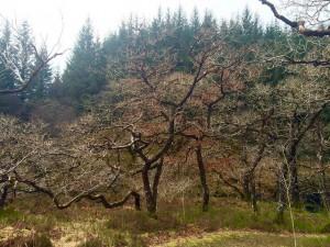 Strone Hill
