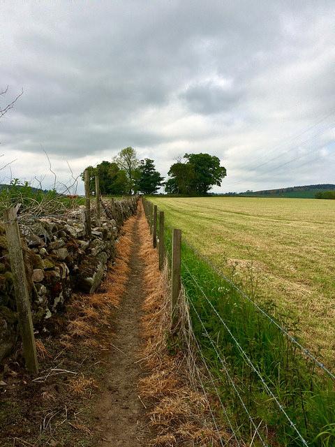 path to Sunhoney