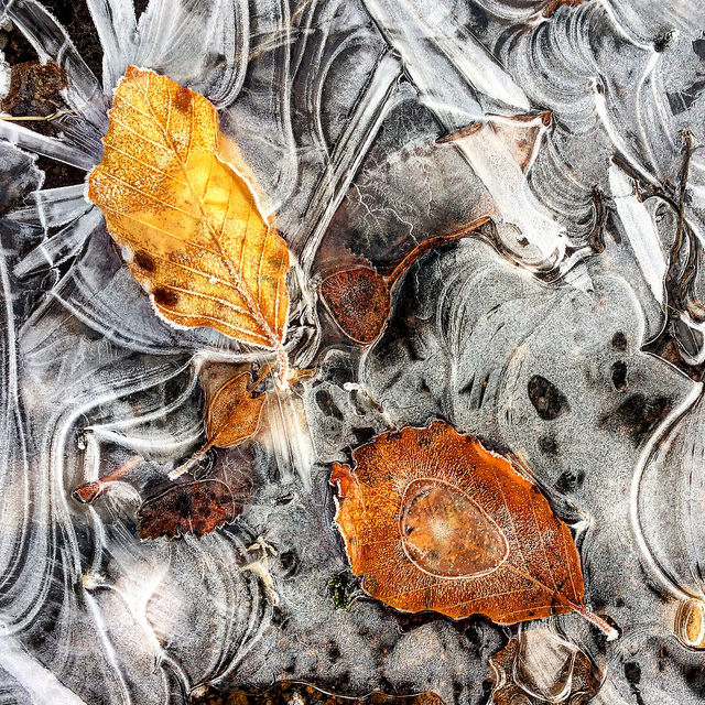 ice and leaves: wintry Aberdeenshire