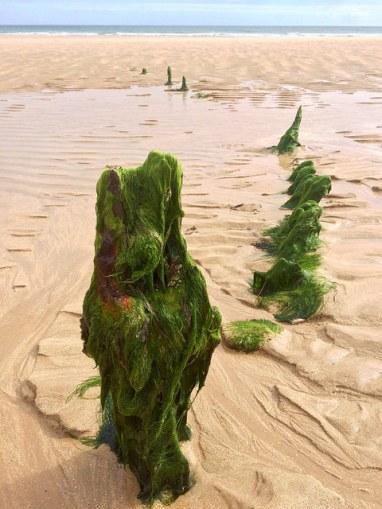 part of a shipwreck - Ailish Sinclair, author