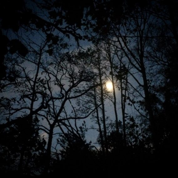 The moon shines through the trees. Ailish Sinclair | Writer