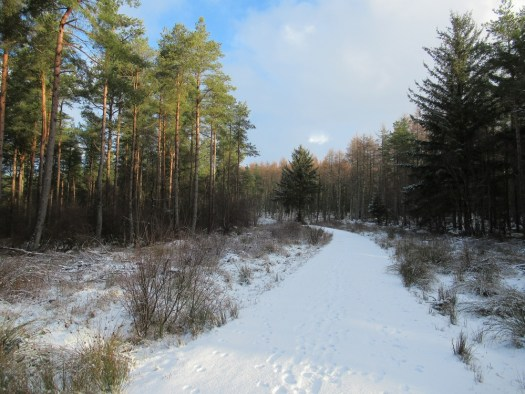 A snowy scene in Delgatie woods. Ailish Sinclair | Castles in the Snow