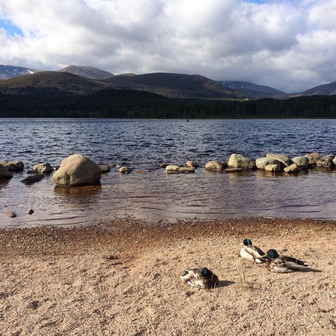 Ducks by Loch Morlich