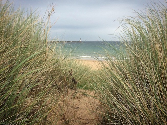 peering through the grasses to the sea