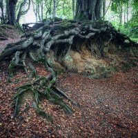 Gnarly Roots and Carbolic Soap at Aden Country Park