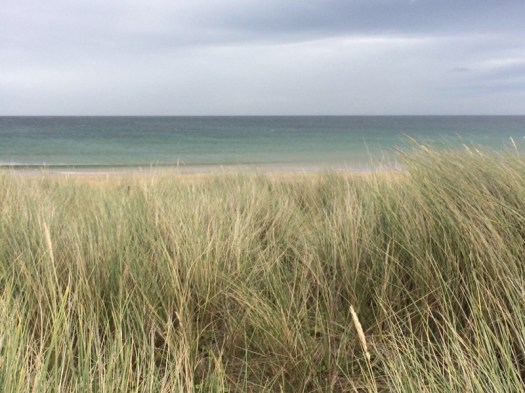through the grasses to the sea