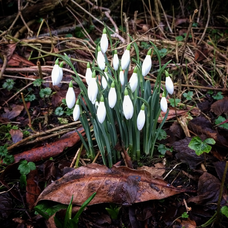 snowdrops | Ailish Sinclair, author