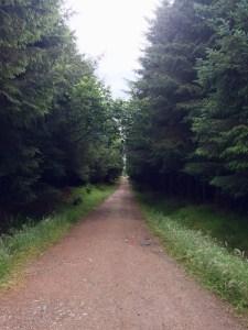 Lenabo woods near Longside