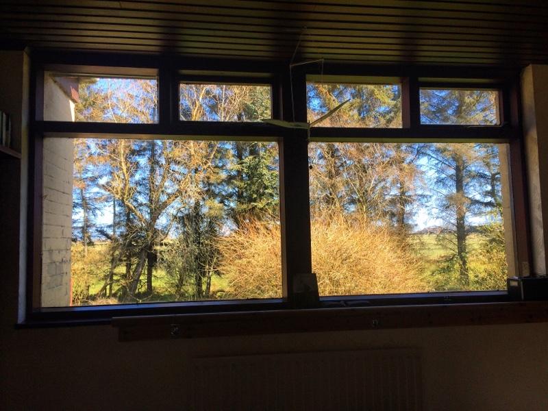 window, no woodpeckers