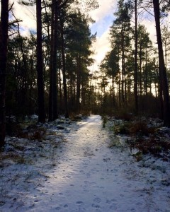 A Snowy Scottish scene in Delgatie woods