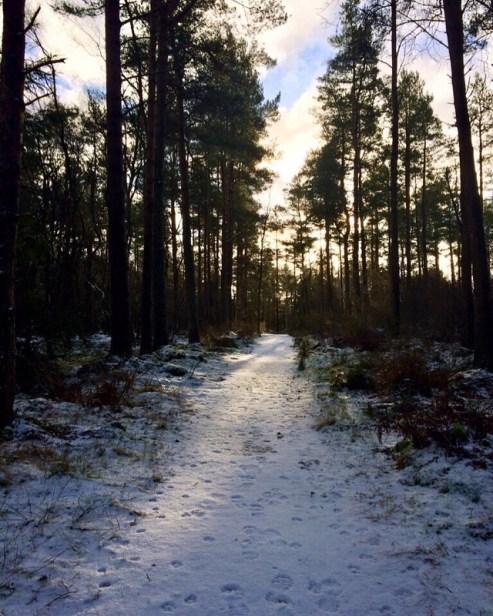 A Snowy Scottish scene in Delgatie woods