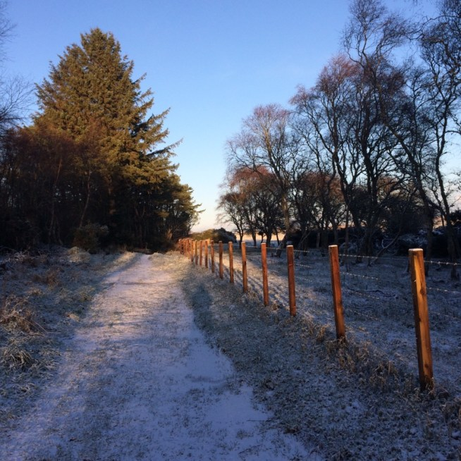 snowy path to a cover reveal