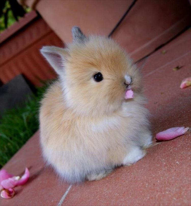 かわいいウサギ27