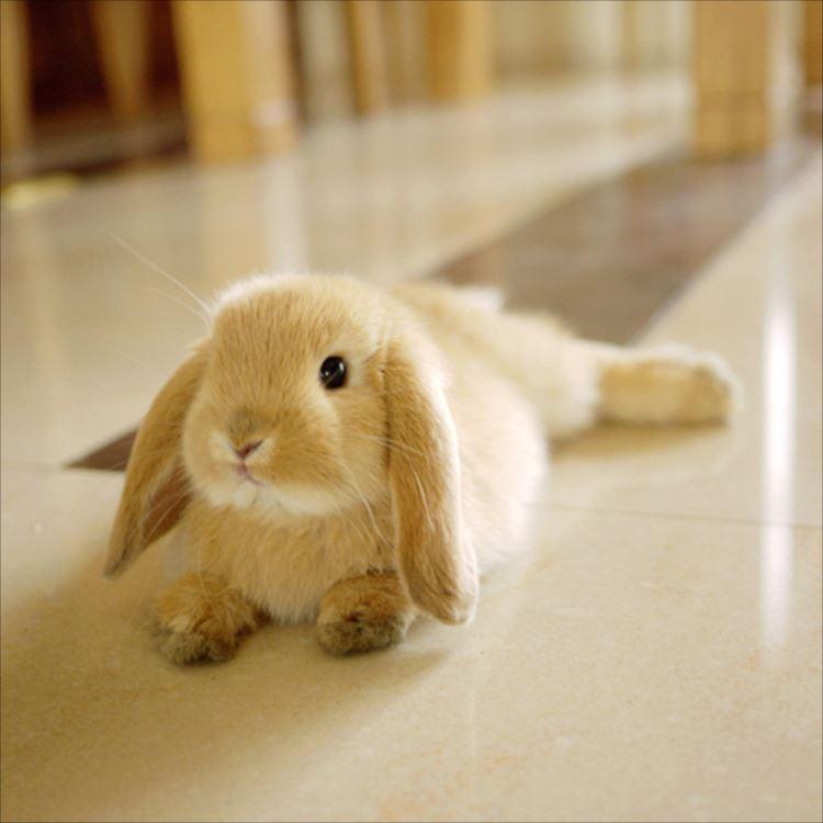かわいいウサギ52