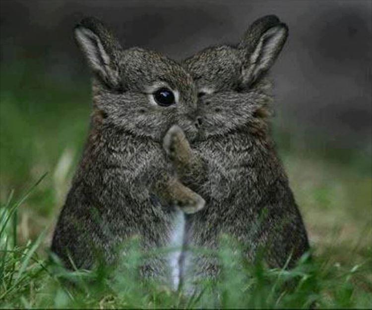 かわいいウサギ62