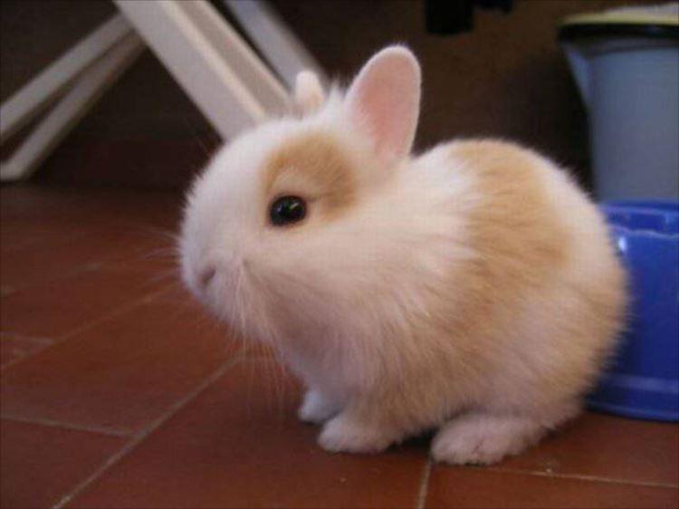 かわいいウサギ9