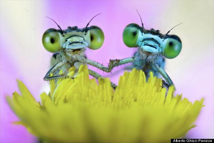 キモイ可愛い虫49