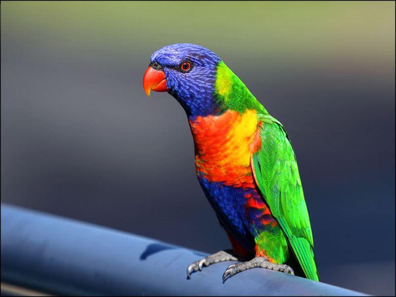 (美しく変わった鳥)日本で見られない変わった鳥 50選+