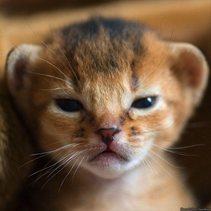 怒っているのに可愛すぎる猫、犬、鳥さんたち(可愛い動物の画像!)