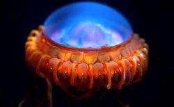 不気味で怖い深海魚39選(変わった水生生物画像まとめ)