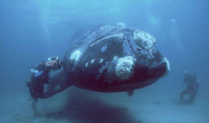 深海生物 29