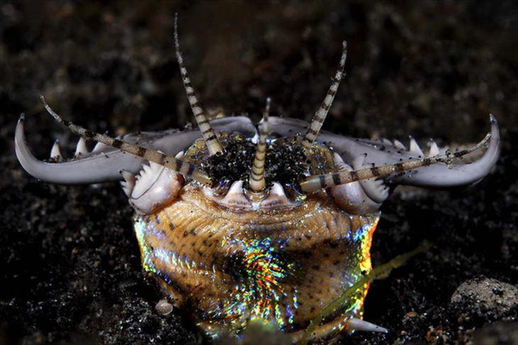 深海生物 8