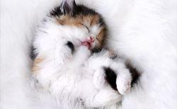 とっても可愛くて癒される眠りに落ちた動物たち(画像)