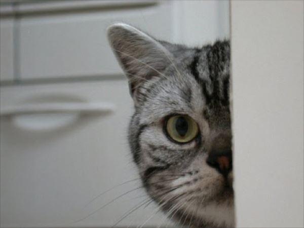 面白猫28