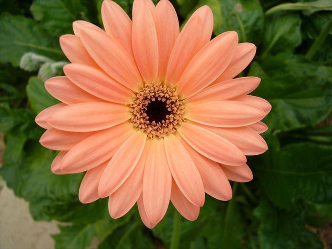 美しい花と花言葉 74