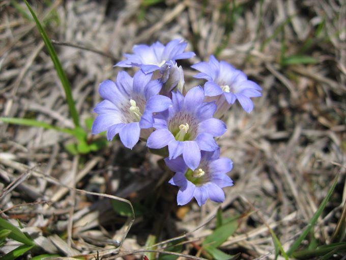 美しい花と花言葉 84