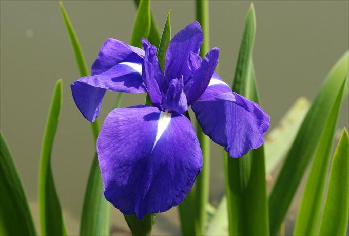 美しい花と花言葉 96