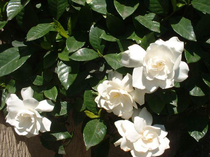 美しい花と花言葉 98