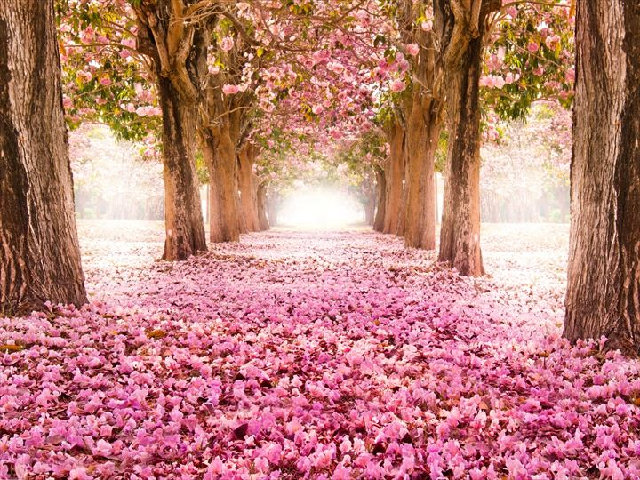 世界の最も美しいトンネル・小道(ツリートンネル画像)