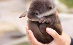 世界最高レベルの癒し!!可愛すぎる小動物たち(画像)