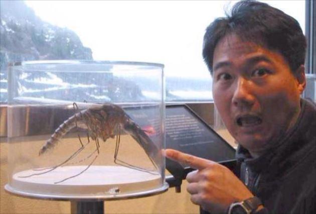 実在した巨大生物・蚊