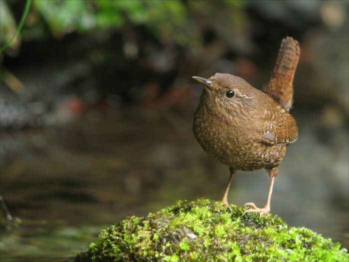 かわいい鳥 3.3