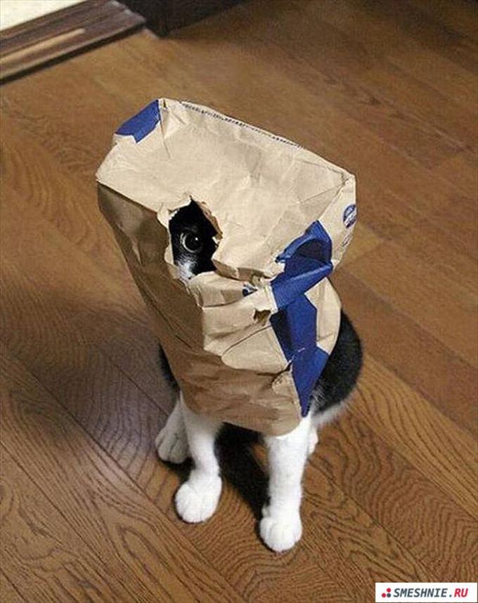 猫おもしろ画像 18