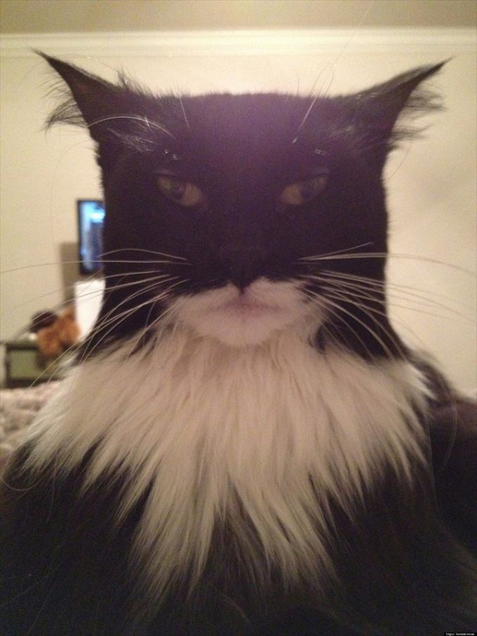 猫おもしろ画像 21