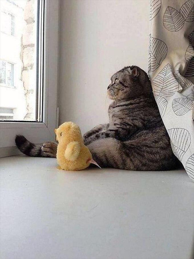 猫おもしろ画像 3