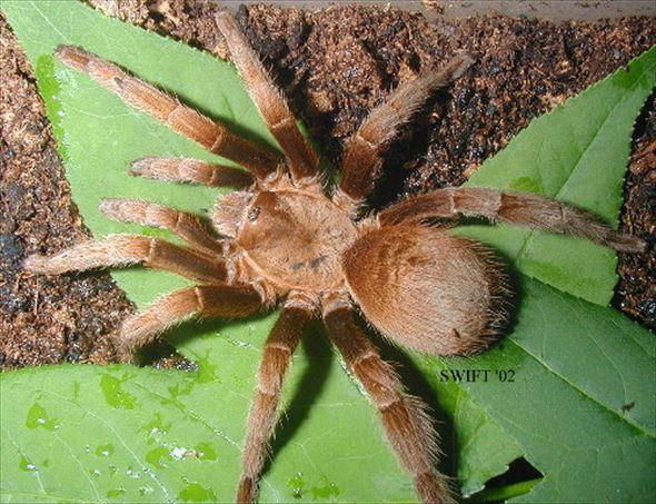 蜘蛛画像 35.0