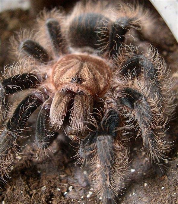 蜘蛛画像 43.0