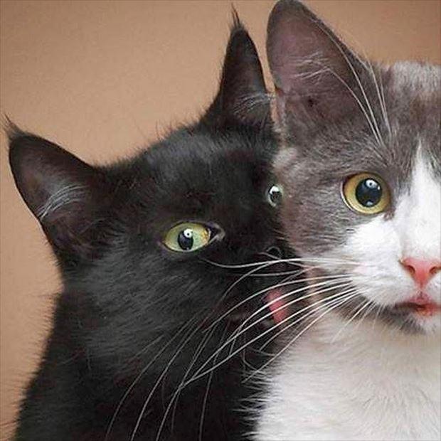 史上最高の猫画像100選