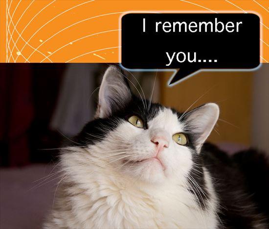 猫雑学 8.0