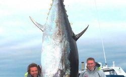 本当にすごい世界の巨大魚たち(まとめ・画像集)