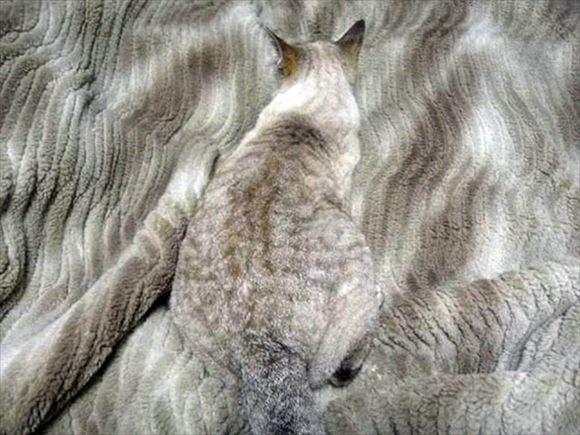 ネコの擬態 22