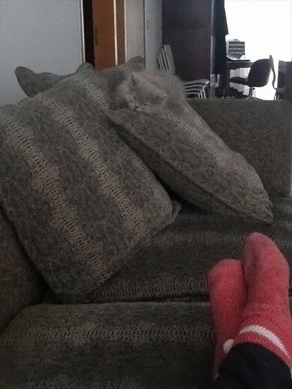 ネコの擬態 29