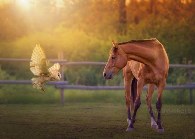 馬とフクロウ