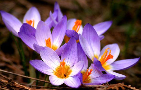 誕生花の一覧と花言葉365日分(月日別・美しい花画像)